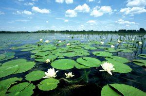 Wetlands WWF 300x198 - Про шану біорізноманіттю та парасолькові види. Чому вартує долучитися до Години Землі