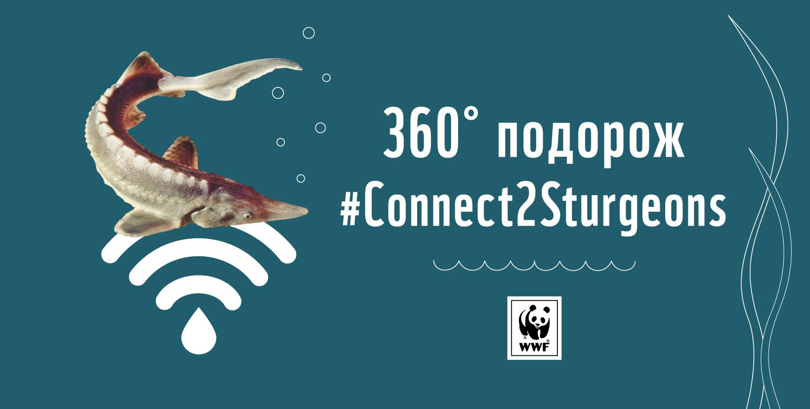 WWF запрошує в інтерактивну подорож до світу осетрових риб