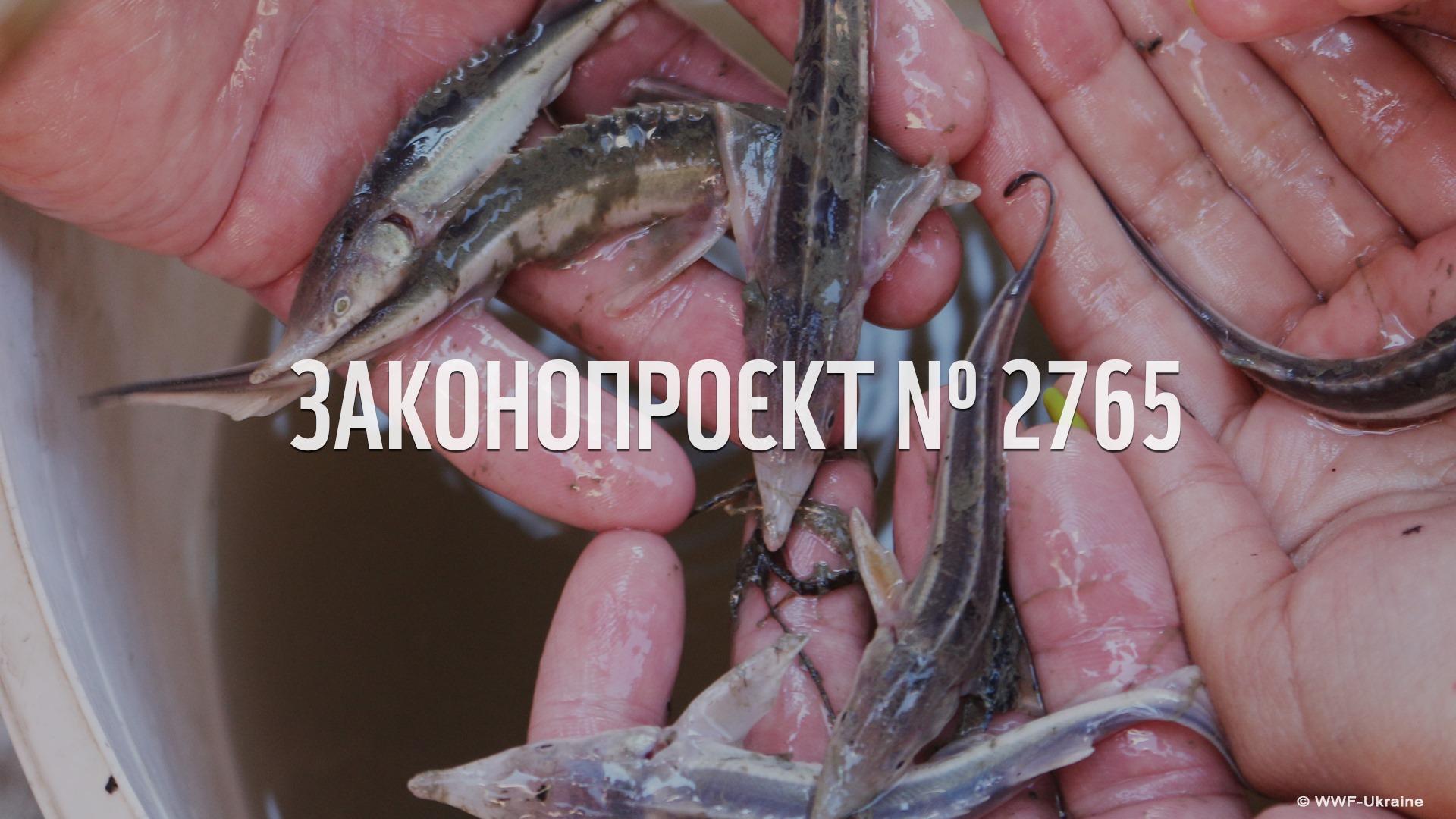 WWF-Україна закликає депутатів зберегти важливі положення законопроєкту №2765